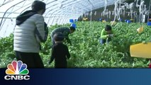 China's Growth in Organic Farms   Inside China   CNBC International