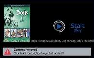 Play Disney 4-Movie Collection: Dogs 1 (Shaggy Da / Shaggy Dog  / Shaggy Dog  / The Ugly Dachshund) Movie Download Now