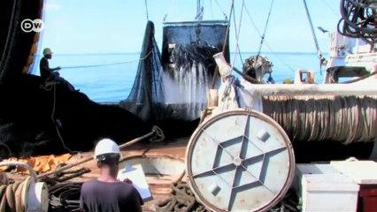 Islas Salomón: el atún, un recurso precioso | Global 3000