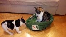 Un pauvre toutou réclame son lit devant un chat impassible
