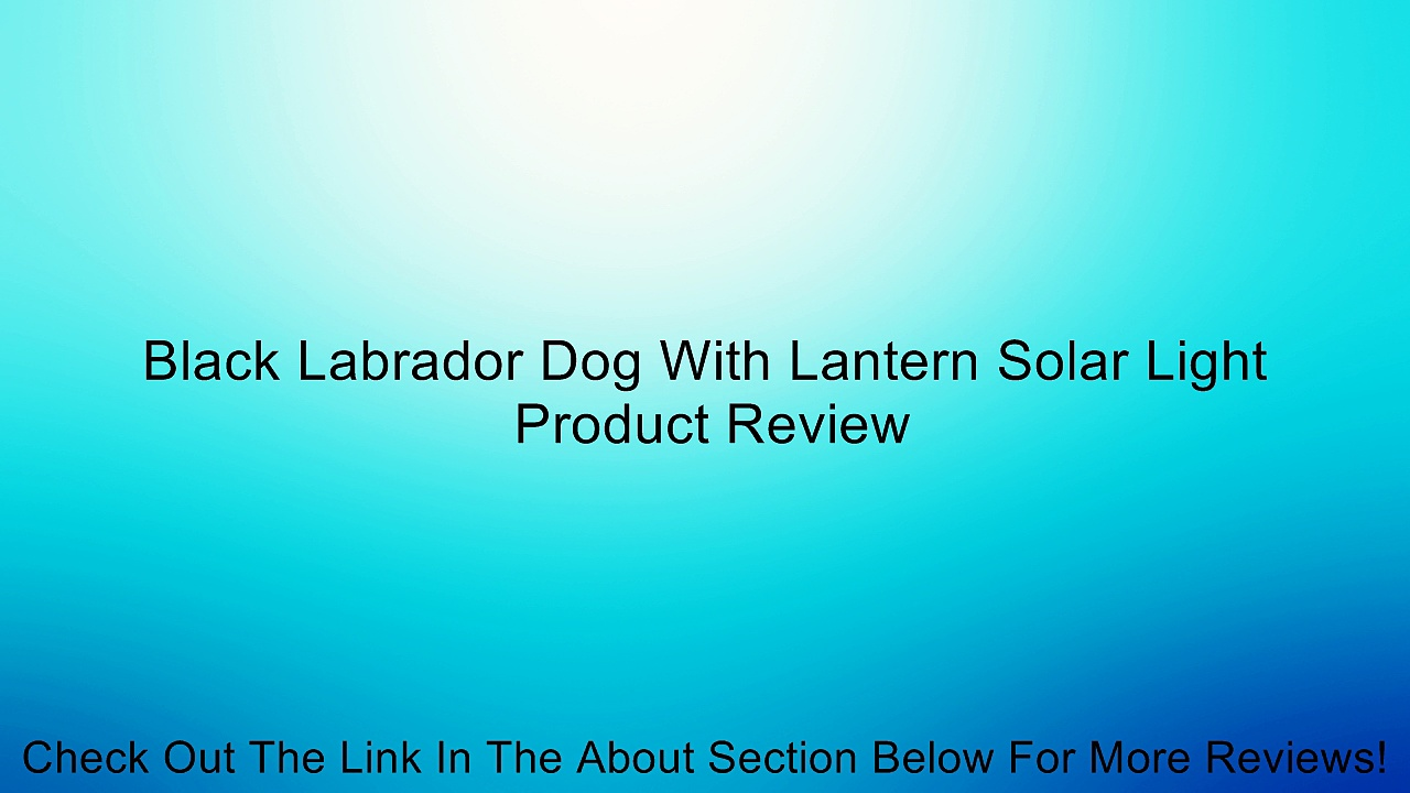 Black Labrador Dog With Lantern Solar Light Review