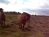 Tout les chevaux viennent me voir