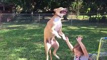 Un chien saute et atterrit sur une petite fille : trop marrant!