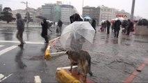 Sokak Köpeğine Şemsiye Tuttu