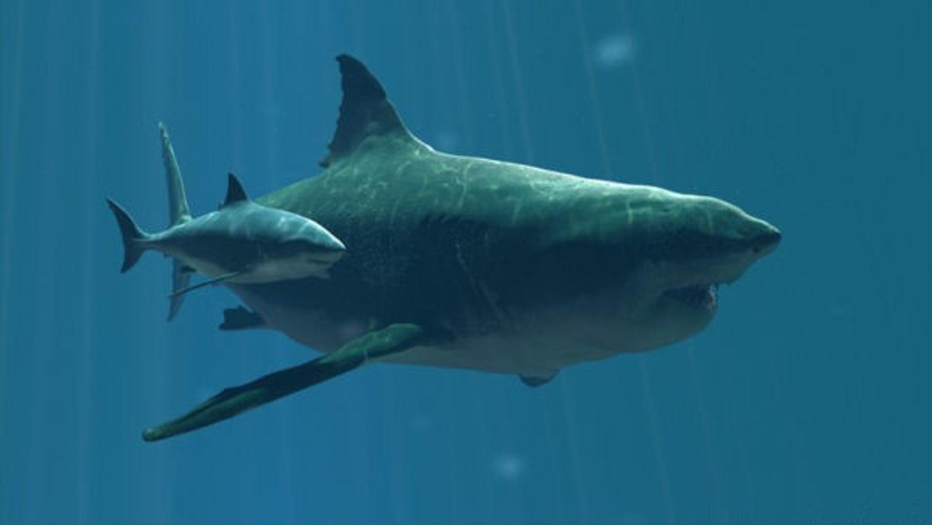 Giant Megalodon - Biggest Shark - Prehistoric Predators Megalodon (Nature  Wildlife Documentary)