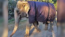 Photos of Elephants Shivering Around A Fire Prompt Giant Coat Drive