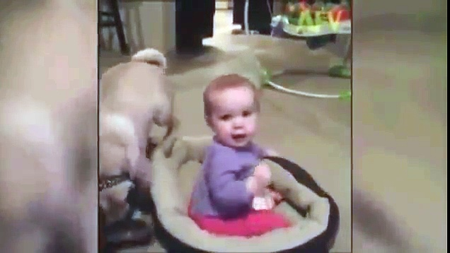 It's Pug vs Baby in Power Struggle Over Dog Bed