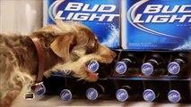 """Budweiser (Anheuser Busch) - bière Bud Light, """"Rescue Dog Weego"""" - février 2012"""