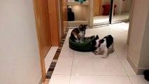 Un pauvre toutou réclame son lit devant un chat impassible (2)
