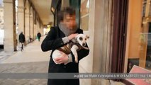 """Friskies - nourriture pour chiens et chats - janvier 2011 - """"Maxi Croquette"""", Coco le Jack Russel"""