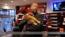 """Friskies - nourriture pour chiens et chats - janvier 2011 - """"Maxi Croquette"""", Ponpon le chat roux"""