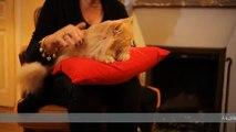 """Friskies - nourriture pour chiens et chats - janvier 2011 - """"Maxi Croquette"""", Poupette le chat angora"""