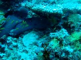 Murène ,maldives. coco palm 2010