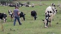 """Les 2 Vaches - yaourts, """"Savoir ce qu'on mange, www.savoircequonmange.com"""" - février 2014"""