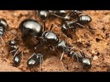 Lord of the Ants (Nova Documentary)