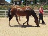 Son cheval se couche dans le sable et elle ne comprend pas pourquoi, jusqu'au moment où… OMG!!