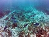 Petit-Terre,2014 banc de petits poissons