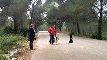 Dressage canin la ciotat 13,éducation canine, la ciotat,Travail de socialisation