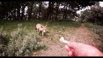 Nourrir des renards sauvages à la main