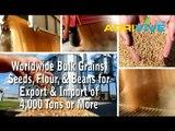 Buy Bulk Sesame Seeds, Sesame Seeds Exporting, Sesame Seeds Exporters, Sesame Seeds Exporter, Sesame Seeds Exports, Sesame Seeds Export
