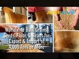 Sesame Seeds Milling, Sesame Seeds, Sesame Seeds Wet Mill, Sesame Seeds, Sesame Seeds, Mill Sesame Seeds, Miller of Sesame Seeds