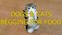 CATS AND DOGS BEGGING STYLE