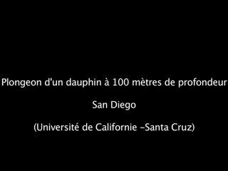 Des dauphins ressentent de l'arythmie cardiaque lorsqu'ils plongent en profondeur