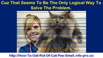 How To Get Cat Pee Smell Out, Cleaning Cat Urine, How To Remove Cat Urine Odor, Cat Urine Odor