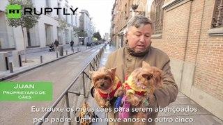 Animais de estimação benzidos na Espanha
