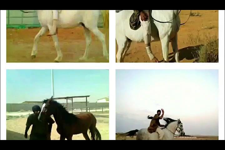 Riding Horses ( Arabian Riding )