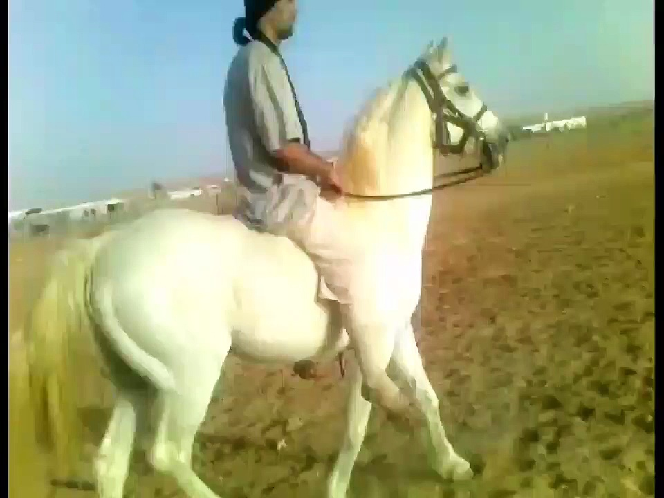 Riding Horses ( Arabian Riding ) gallop videos