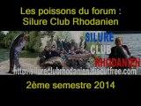 les poissons du forum du : Silure Club Rhodanien