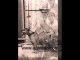 Maurice Carver Dog's. American Pit Bull Terrier. Pitbull apbt