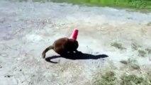 Un chien aide un chat qui a la tête coincée dans une gobelet!