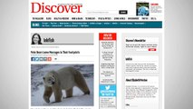 Polar Bears Track Potential Mates By Smelling Footprints
