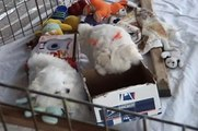 CUTE PUPPIES 8 Weeks Old Puppies vs Cat