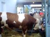 Bik težak 1583 kg