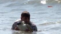 Mersin Tedavi Edilen 16 Deniz Kaplumbağası Doğal Yaşamına Bırakıldı