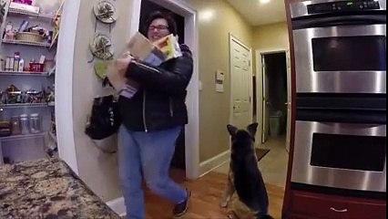 Scaring mum with a fake dog.... #BestPranks