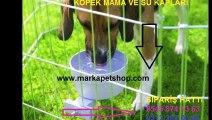 köpek su kapları,köpek mama su kapları,mama kabı fiyatı,mama kabı fiyatları,mama kapları fiyatı,mama kapları fiyatları
