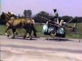 Kicked boye horse