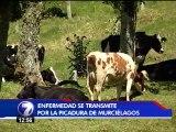 Rabia paralítica bovina tiene en alerta al SENASA