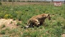 Animals Documentary National Geographic: Animals/Wildlife/Nature (Documentary) #09