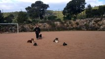 Dressage canin la ciotat 13 Obéissance canine la ciotat toutoucool13