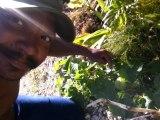 2015/02/01 16h34 Mon 1er Melon Guadeloupe Planté Jardin Fait Maison Yannis MALAHËL Dimanche 01 Février 2015