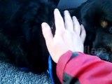 Ce chien ne cesse de pleurer pour une raison qui vous fendra le coeur! OUF!