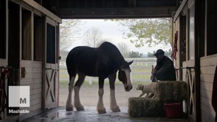 The best of the 2015 Super Bowl commercials