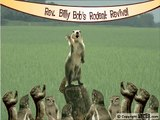 Rev. Billy Bob's Rodent Revival
