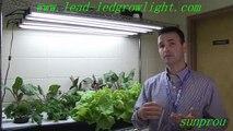 led grow lighting lamp for indoor plant lighting