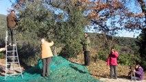 Huile d'olive Tunisie | Tunisian Olive Oil